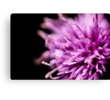velvet flower Canvas Print