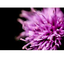velvet flower Photographic Print
