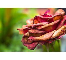 rozze Photographic Print