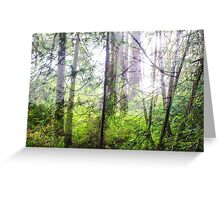 Pacific Coastal Forest Greeting Card