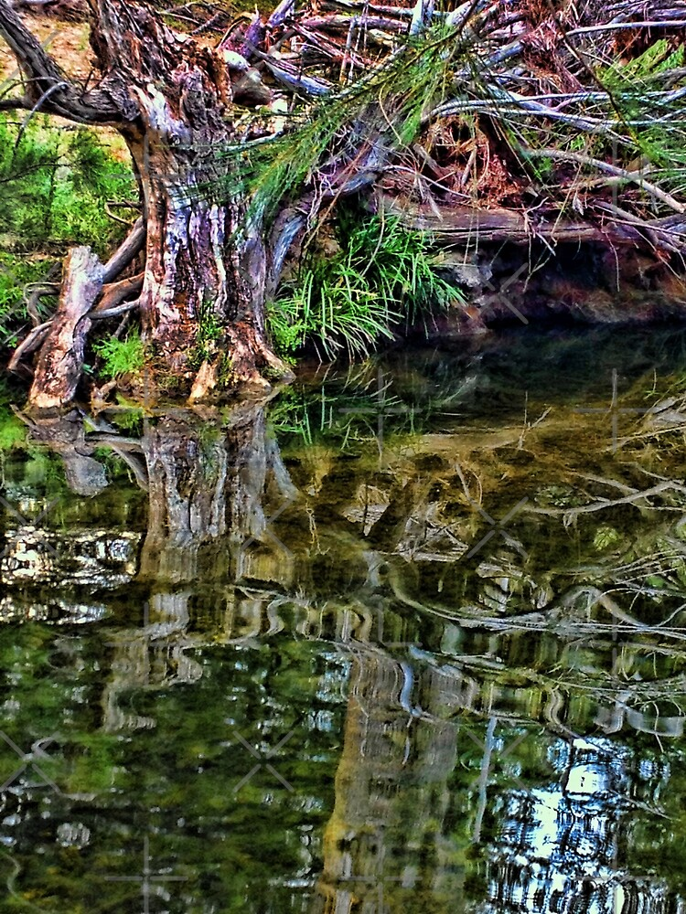 Reflections - Turon River by Deborah McGrath
