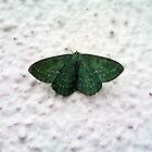 Moth on the wall by IamJane--
