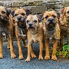 Border Terriers by Sandra Cockayne