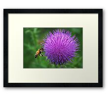 ball flower Framed Print