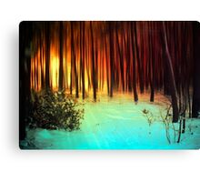 Forest light2 Canvas Print