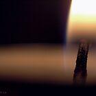 Light the Dark by Zen-Art (Zenith)