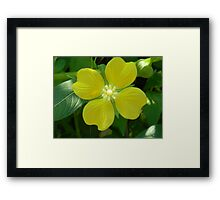 A Water Willow Bloom Framed Print