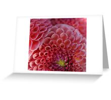 Pink dahlia - 2016 Greeting Card