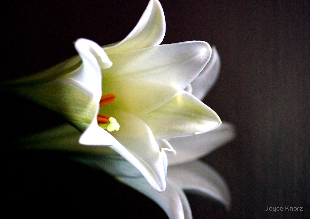 Soft Focus Lillies by Joyce Knorz