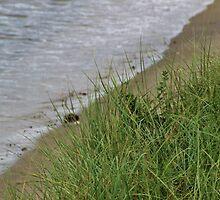 Grassy Beach by Gilda Axelrod
