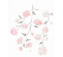 baby pink flowers Photographic Print