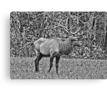 King Stag In Black And White   Canvas Print