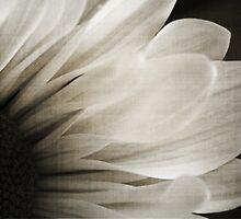 Abstract Daisy by Angela King-Jones