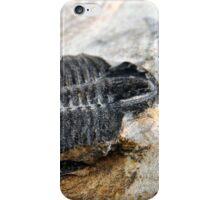 Trilobite iPhone Case/Skin