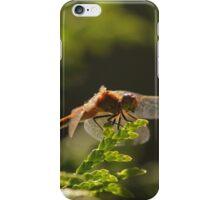 Orange in the Green iPhone Case/Skin
