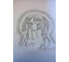 Beagle Sketch Photographic Print