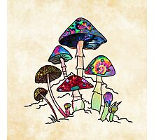 Garden of Shroomz Photographic Print