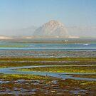 Morro Bay Morning by Barbara  Brown