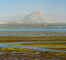 Morro Bay Morning by Barbara  Brown