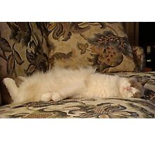 """""""This is the SWEET Life, On the NO-NO Sofa""""! Photographic Print"""