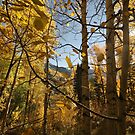 Telluride in the Fall by rwhitney22