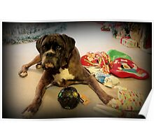 Is That Another Christmas Present For Me ?  - Boxer Dogs Series Poster