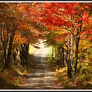 Autumn Path to Winter by Michelle Callahan
