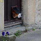 Dog Flap by spottydog06