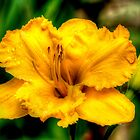 golden flower of brookgreen by imagetj