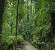 A walk through the rainforest in Dorrigo, NSW by Clare Colins