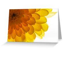 Sunny yellow chrysanthemum background Greeting Card