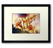 Spring flowers daffodils  Framed Print