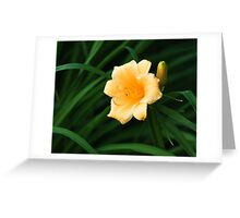 a lonely flower Greeting Card