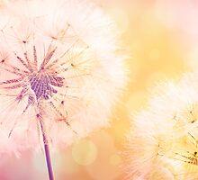 Dandelion by artsandsoul