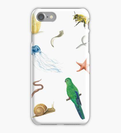Phylogenetic Tree of Animals iPhone Case/Skin