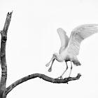'My perch! go away!' by nadine henley