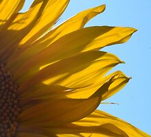 Sunflower by Angelicus73
