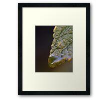 Water Droplet V Framed Print