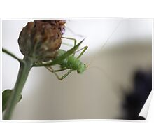 Grasshopper on a twig Poster