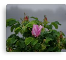 Rose at Dawn Canvas Print
