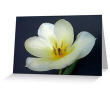 Full Open White Tulip Greeting Card
