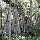 Banyan Trees by dww25921