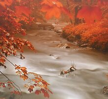 Fog River by Enri-Art