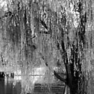 Weeping Willow in Black and White by WeeZie