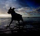 Aqua dog .3 by Alex Preiss