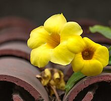 Yellow Flowers on Tile Roof by Iris MacKenzie