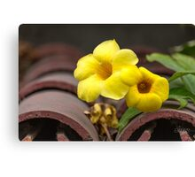 Yellow Flowers on Tile Roof Canvas Print