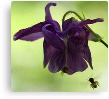 Purple Columbine - Bee Approaching Canvas Print