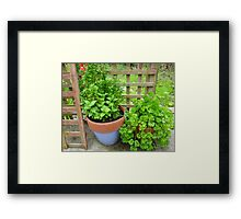Parsley And Mint Framed Print