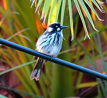 Bird On a Wire by Cindy Hitch
